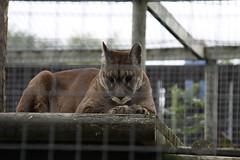 Shepreth Wildlife Park 17-08-10