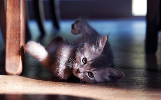 Little kitten roll o