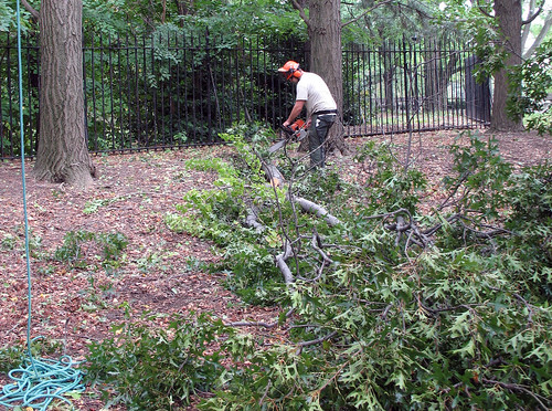 BBG arborist at work