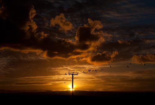 birds wales sunrise canon pembrokeshire efs 1755mm sandyhaven 40d canon40d