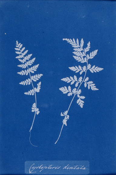 this day in history march 16 1799 anna atkins was born