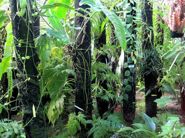 Jardin des plantes de nantes plantes dans l 39 aile ouest for Jardin des plantes nantes