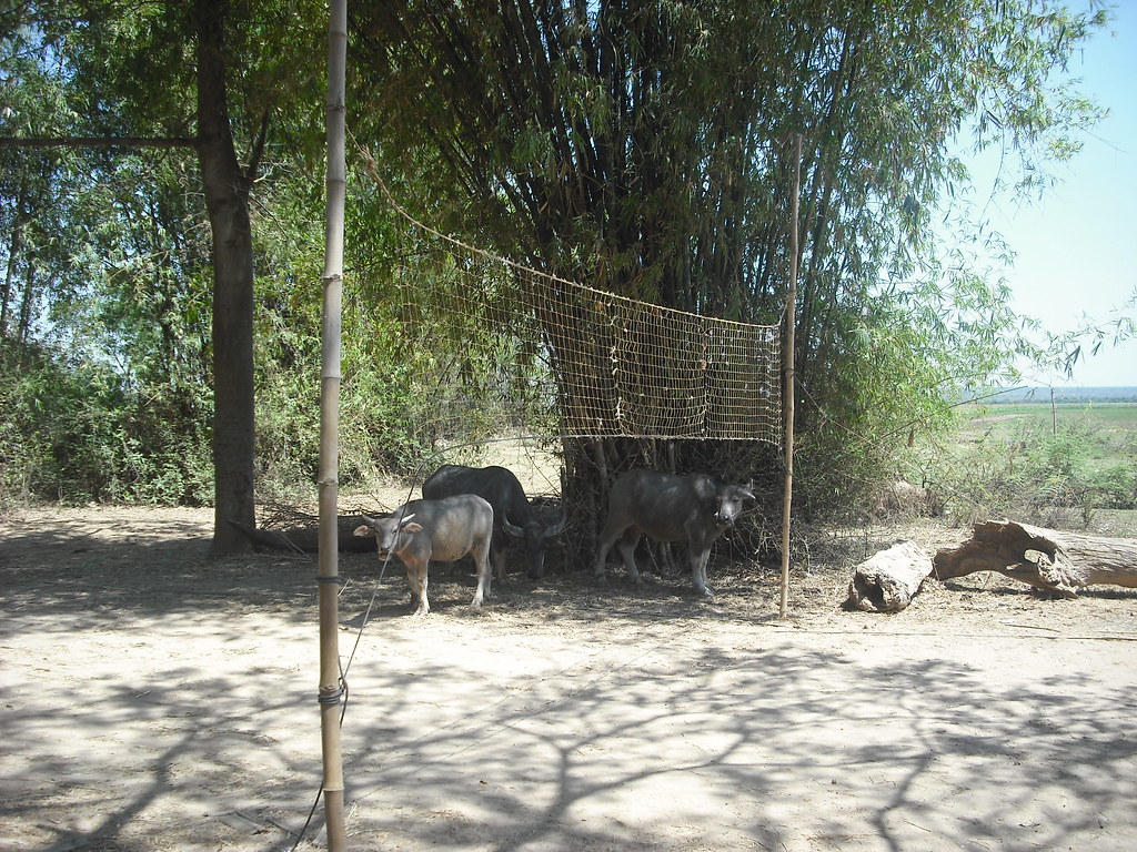 Water Buffalo and Net Sports