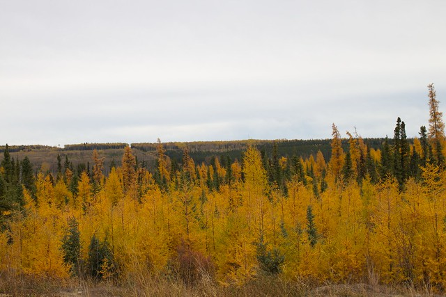 Header of silviculture