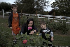 grandmother & grandsons picking flowers
