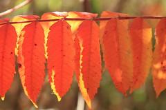Leaf Row