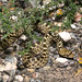 Bullsnake - Photo (c) tom spinker, some rights reserved (CC BY-NC-ND)