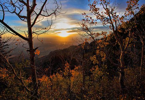 trees sunset mountain leaves landscape calendar