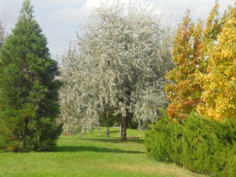 Jardín otoñal 1