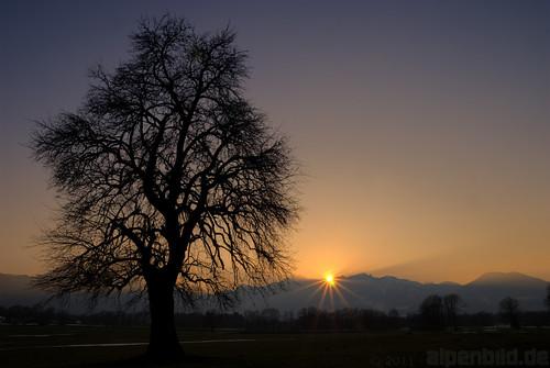 sunset bayern bavaria sonnenuntergang beech buche nussdorf 巴伐利亚 wendelstein chiemgau alpenbildde