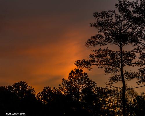nature sunset sundown trees