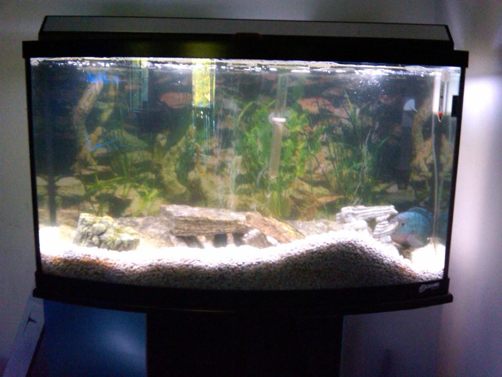 Dirty water aquarium advice aquarium forum community for Dirty fish tank
