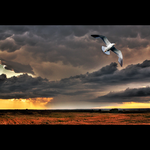 storm rain clouds photoshop canon gull fields layers thedoors highplains ridersonthestorm justclouds canoneosdigitalrebelxsi saariysqualitypictures bestcapturesaoi magicunicornverybest selectbestexcellence sbfmasterpiece jackaloha2 elitegalleryaoi dblringexcellence tplringexcellence