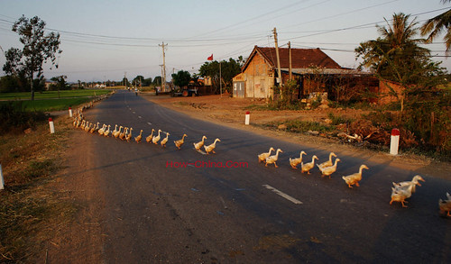 street city sunset beach kids river view market ducks vietnam 城市 蜥蜴 lizards 日落 街 鸭 越南 湄公河 vietnammekong 越南市场 越南海滩 越南沙滩 越南小孩
