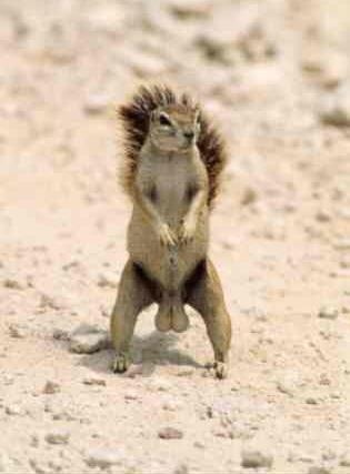 funny-animals-squirrel-nutt