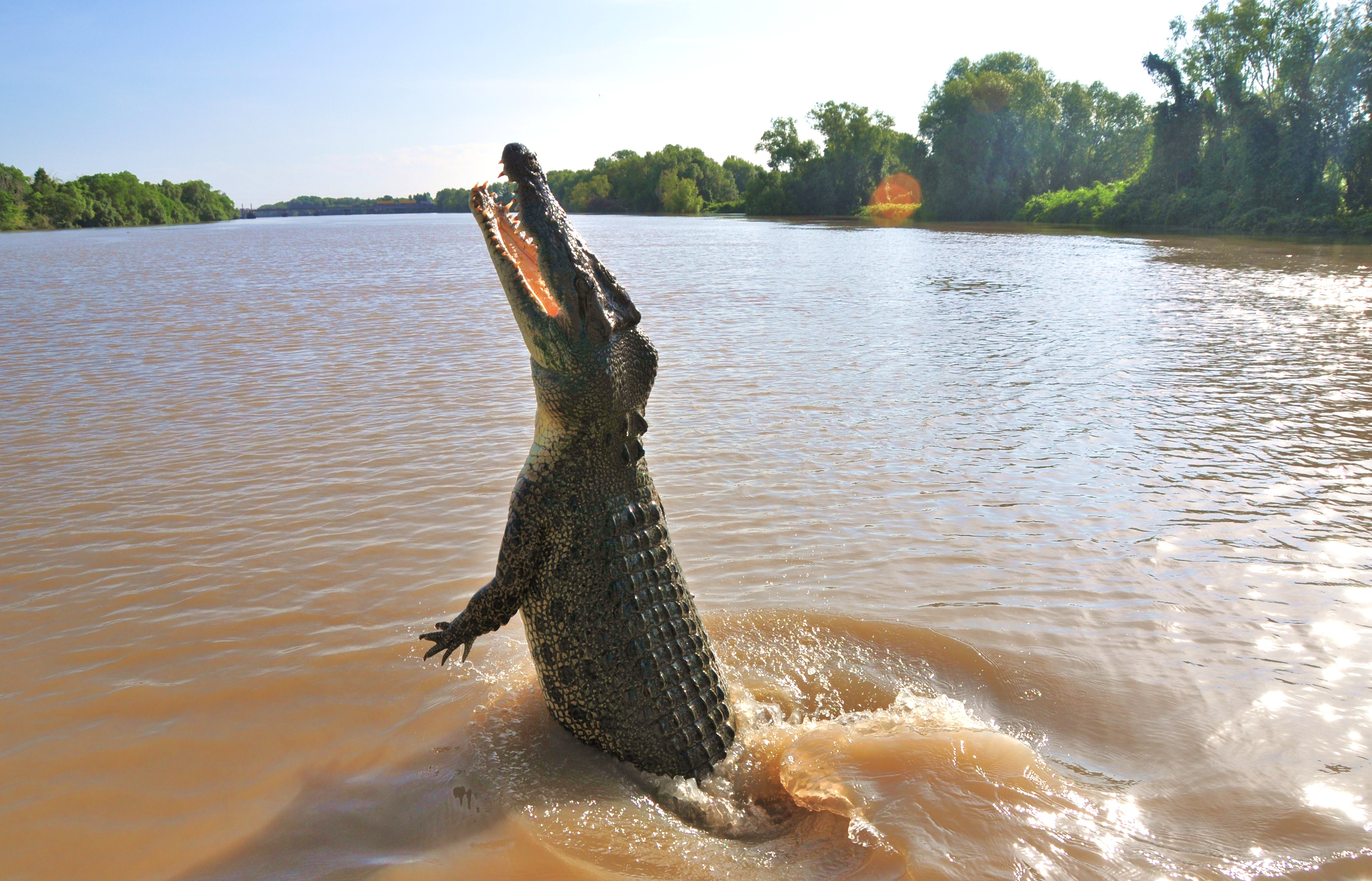 Jumping crocodiles