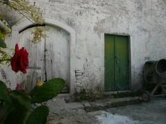 the rose of Korfu