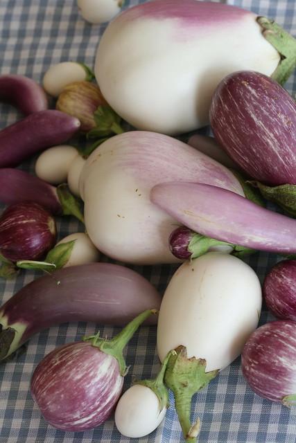 Aubergines / Eggplants / Oma aia pommud / Oma aia baklažaanid