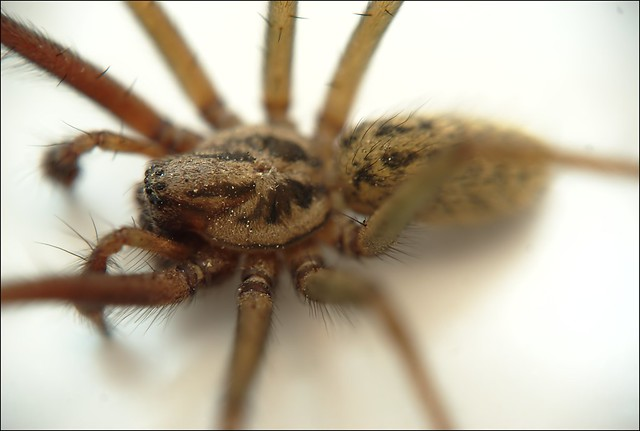 how to get rid of spiders in the house how to get rid of them apps