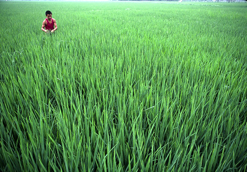成都的稻田(Source: UN Photo/John Isaac via Flickr)