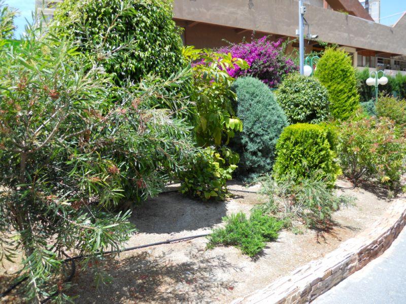Arbustos mediterráneos