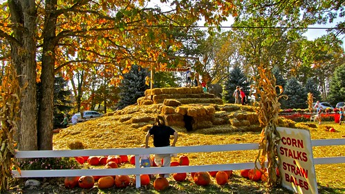 Straw Maze and pumpkins
