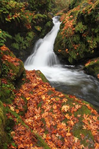 autumn fall nature outdoors waterfall washington leaf scenery hiking acme whatcom