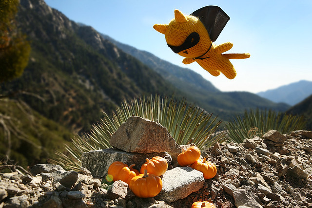 Poisson descends upon Cromwell's pumpkin patch