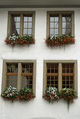 Window boxes, Thun