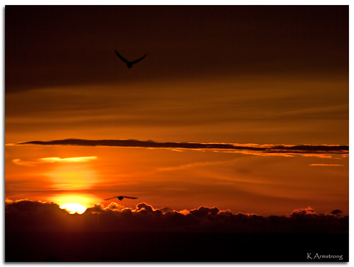 sun toronto ontario canada birds clouds sunrise nikon gulls lakeontario d3000 nikonflickraward tgamphotodeskcolour