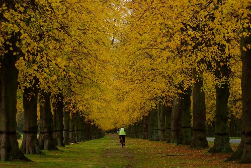 Biking down Lime Tree Avenue in the Autumn