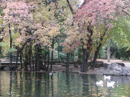 patos parque campogrande