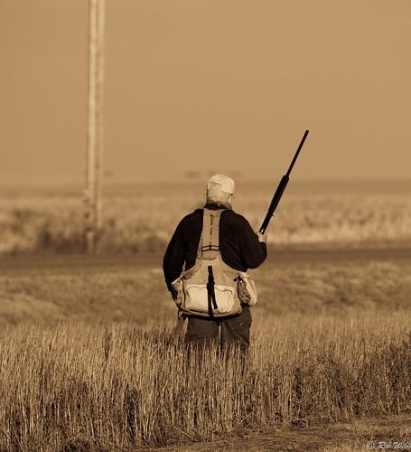 usa field walking pheasant wheat hunting western kansas hunter shotgun experienced sublett