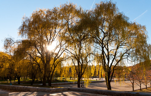 park autumn trees sky usa newyork fall leaves sunshine yellow willow westchester d300 kensico sigma1020hsm