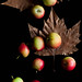 Crab Apples | Falling [Explored] by Gourmande in the Kitchen