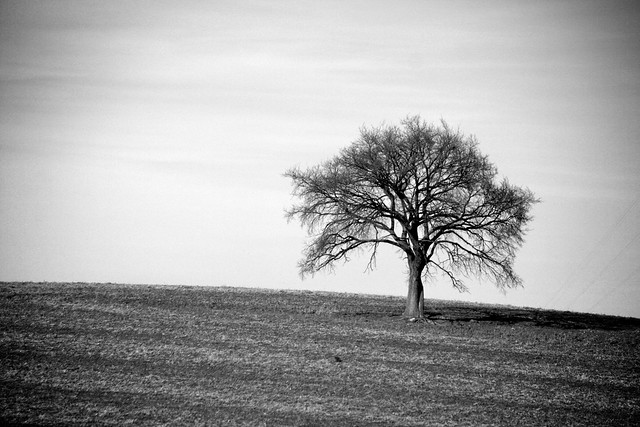 Lonely Black And White Lonely Tree—B...
