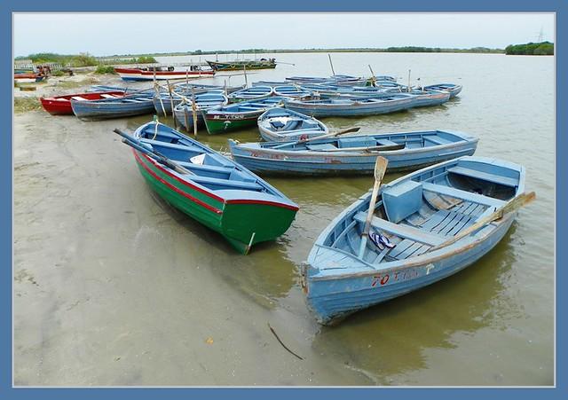 Pichavaram boats