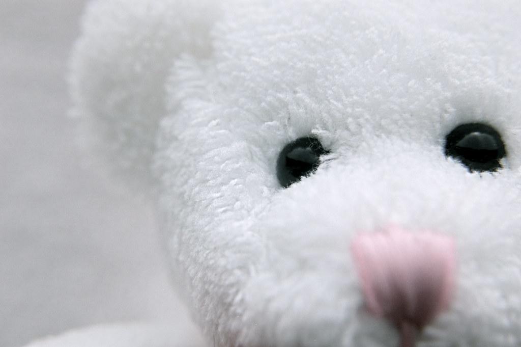 Bearly Visible