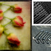 Week 18 -  Zigzag by The Shutterbug Eye™