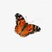 Drawing of a Butterfly - Dibujo de una Mariposa by Marcos Telias