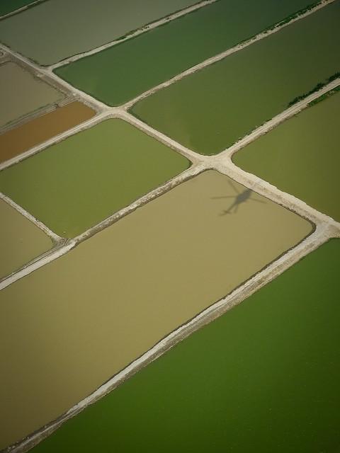 Flooded ponds
