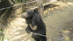 Loose the fear of bear at Agra bear rescue centre - Things to do in Agra