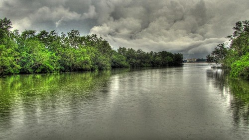 trees storm water rain clouds landscape singapore swamp malaysia hdr sungeibuloh canonpowershotsx210is