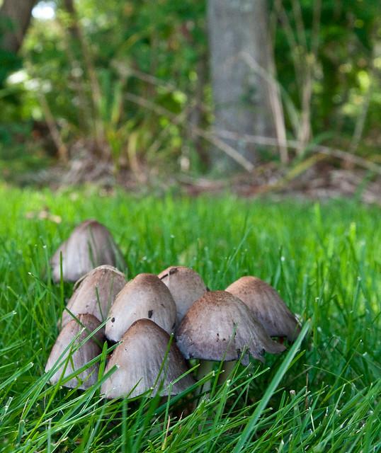 Covey of Mushrooms