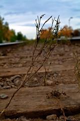 Battered Plant