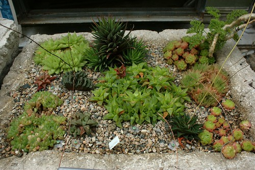 Haworthia collection (2)