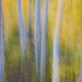 A Dream of Aspens by Robin Black Photography