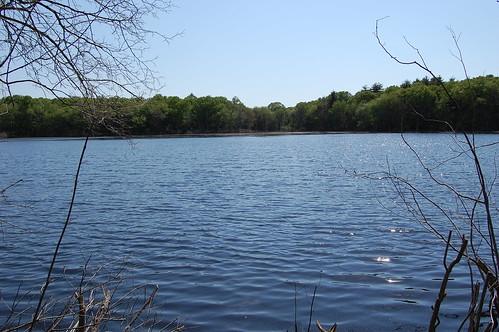 DelCarte: Pond 4