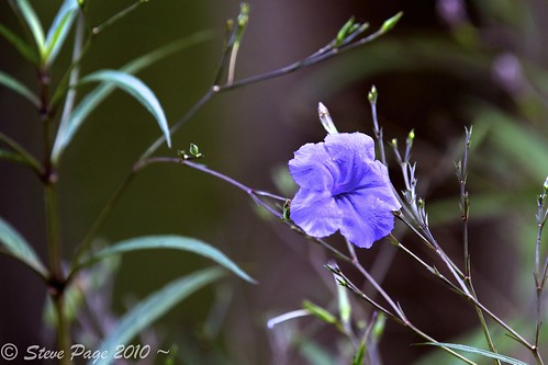 blue blur water leaves canon eos bokeh bloom stevepage itail stephenpage canon7d pagephotos canonef70200mmf28lisiiusm stevepagephotography