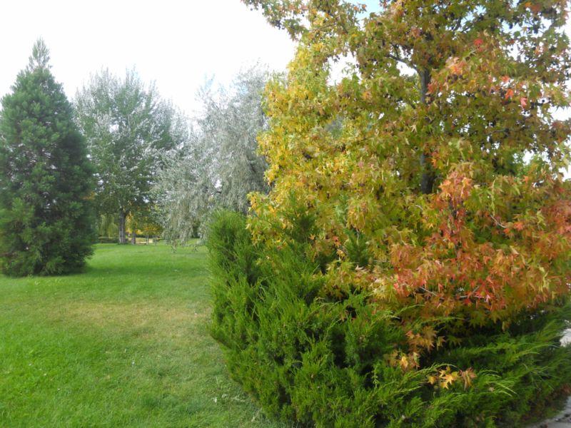 Jardín otoñal 3